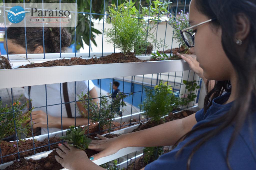 Construção do Jardim Vertical na IV SEMEAMPA